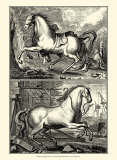 Galloping Horses I Poster