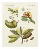Breadfruit Giclee Print by  Bertuch