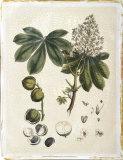 Miller's Bounty V Giclee Print by  John Miller (Johann Sebastien Mueller)