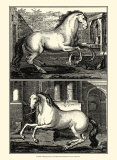 Galloping Horses II Prints