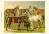 Horse Breeds I Poster von Emil Volkers