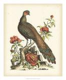 Regal Pheasants III Giclee Print by George Edwards