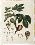 Miller's Bounty III Giclee Print by  John Miller (Johann Sebastien Mueller)