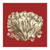 Coral on Red III Prints