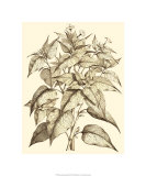 Sepia Munting Foliage III Premium Giclee Print by Abraham Munting