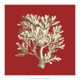 Coral on Red IV Giclee Print