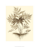 Sepia Munting Foliage IV Premium Giclee Print by Abraham Munting