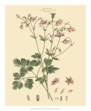 Blushing Pink Florals IX Giclee Print by  John Miller (Johann Sebastien Mueller)