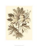 Sepia Munting Foliage V Premium Giclee Print by Abraham Munting