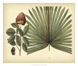 Antique Brazilian Palm Print by Sir Hans Sloane