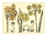 Narcissus in Bloom I Giclee Print by  Langlois