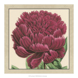 Peony Collection V Giclee Print
