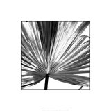 Black and White Palms III Reproduction procédé giclée par Jason Johnson