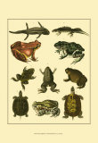 Oken Amphibians Prints by Lorenz Oken