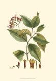 Crimson Botanical I Prints by  Hierseman