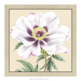 Peony Collection VI Giclee Print