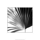 Black and White Palms IV Premium Giclee Print by Jason Johnson