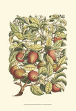 Apple Tree Branch Prints by Henri Du Monceau