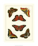 Butterflies I Premium Giclee Print by Pieter Cramer