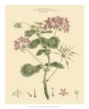 Blushing Pink Florals IV Giclee Print by  John Miller (Johann Sebastien Mueller)