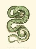 Vibrant Snake I Poster by Frederick P. Nodder