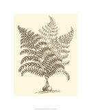 Sepia Munting Foliage VI Premium Giclee Print by Abraham Munting