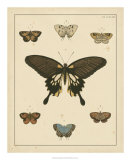 Heirloom Butterflies I Giclee Print by Pieter Cramer