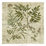 Garden Verses II Giclee Print