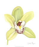 Orchid Beauty II Posters by Jennifer Goldberger
