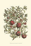 Pomegranate Tree Branch Art Print by Henri Du Monceau