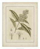 Tinted Botanical II Prints by Samuel Curtis