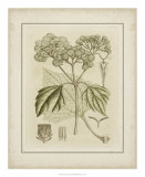 Tinted Botanical IV Prints by Samuel Curtis