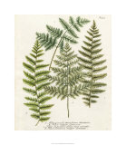 Fern Gathering I Giclee Print by Johann Wilhelm Weinmann