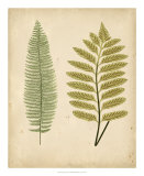 Cottage Ferns II Art by Edward Lowe
