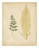 Cottage Ferns IV Prints by Edward Lowe