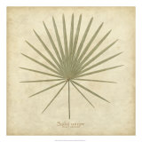 Dwarf Palmetto Posters by Becky Davis