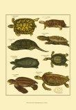Oken Tortoise Poster by Lorenz Oken