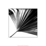 Black and White Palms II Giclee Print by Jason Johnson