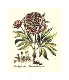 Framboise Floral III Premium Giclee Print by Besler Basilius