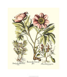 Framboise Floral II Premium Giclee Print by Besler Basilius