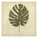 Windowleaf Giclee Print by Becky Davis