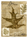 Leaf Collage II Giclee Print by Kate Archie