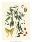 Butterfly and Botanical III Giclee Print by Mark Catesby