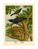 Purple Grackle Giclee Print