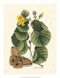 Butterfly and Botanical I Giclee Print by Mark Catesby
