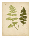 Cottage Ferns III Posters by Edward Lowe