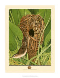 Long-Billed Marsh Wren Giclee Print