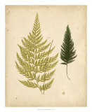 Cottage Ferns I Posters by Edward Lowe