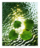 Floating Light Giclee Print by Leonard Morris