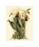 Dramatic Orchid II Premium Giclee Print by J.k. Mosferlander